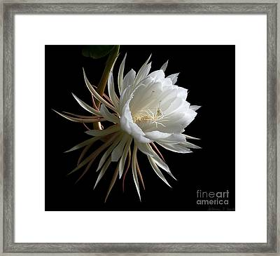 Night-blooming Cereus 1 Framed Print by Warren Sarle