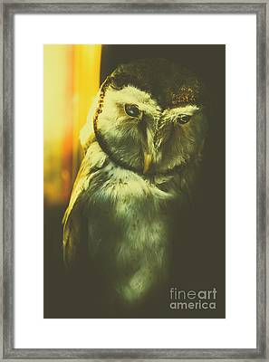 Night Owl Framed Print by Jorgo Photography - Wall Art Gallery