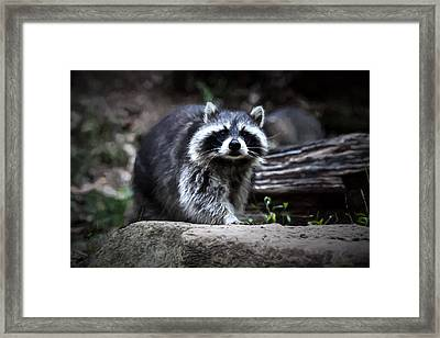 Night Prowler Framed Print by John Haldane