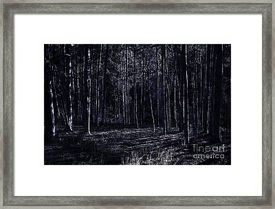 Night Thicket  Framed Print by Jorgo Photography - Wall Art Gallery