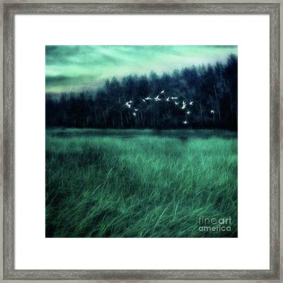Nightbirds Framed Print by Priska Wettstein