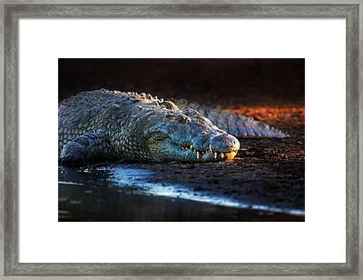 Nile Crocodile On Riverbank-1 Framed Print by Johan Swanepoel