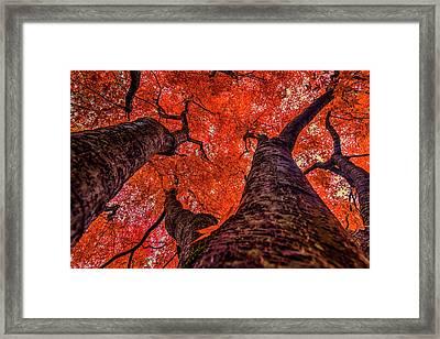 Nishinomiya Japanese Garden - Autumn Trees 2 Framed Print by Mark Kiver