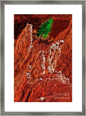 No Tree Stands Alone Framed Print by Blake Richards