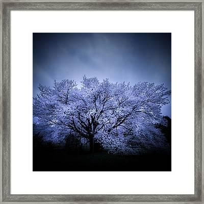 Noble Blossom Framed Print by Masa Onikata