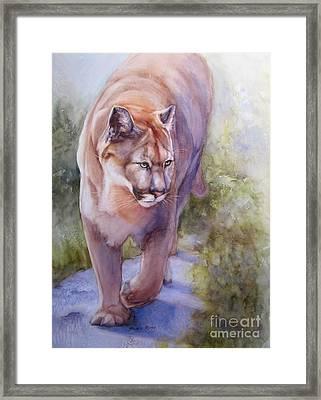 Noble Cougar Framed Print by Bonnie Rinier
