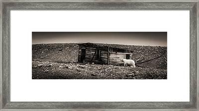 Nobody Home - Black And White Polar Bear Photograph Framed Print by Duane Miller