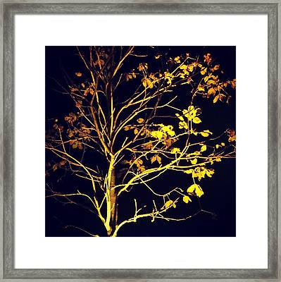 Nocturnal Tree Framed Print by Contemporary Art