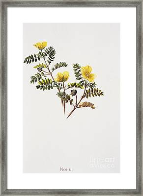Nohu Flower - Vintage Framed Print by Hawaiian Legacy Archive - Printscapes
