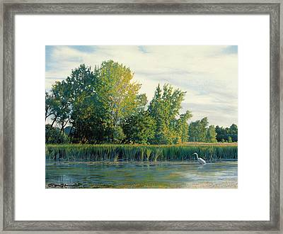 North Of The Grade-great Egret Framed Print by Bruce Morrison