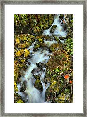 North Vancouver Island Waterfall Framed Print by Adam Jewell