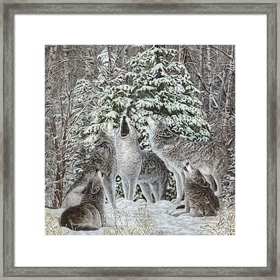 Northland Quintet Framed Print by Wayne Pruse