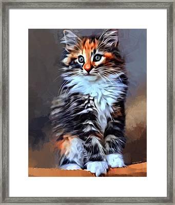 Norwegian Forest Kitten Framed Print by Scott Wallace