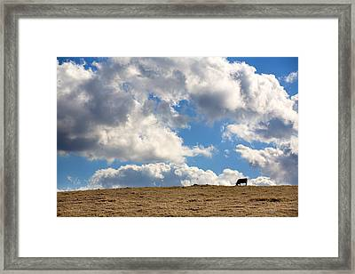 Not A Cow In The Sky Framed Print by Peter Tellone