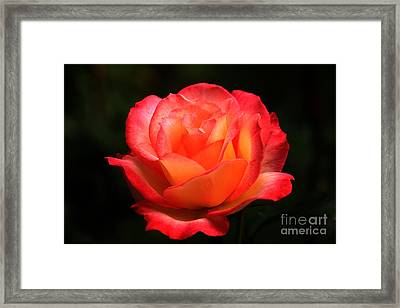 Not A Second Hand Rose Framed Print by James Eddy