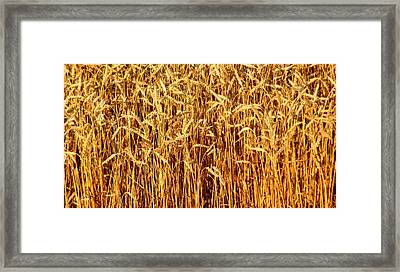 Not Just In Kansas Framed Print by Ed Smith