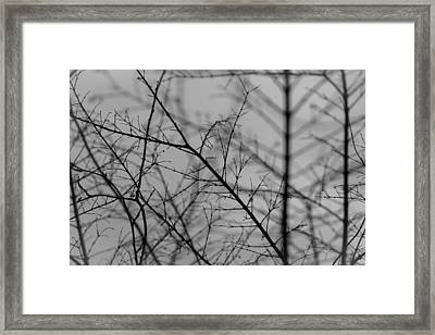 Not Quite Spring Framed Print by Andrew Pacheco