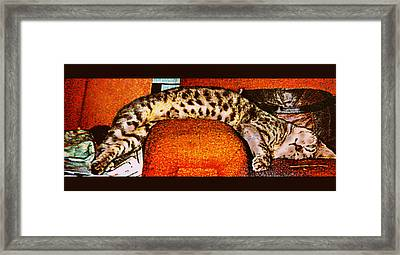 Nothin Like A Good Nap... Framed Print by Camille Reichardt