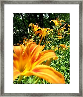 Nothing But Flowers Framed Print by Fareeha Khawaja