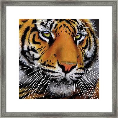 November Tiger Framed Print by Jurek Zamoyski