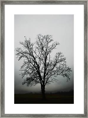 November Tree In Fog Framed Print by Patricia Motley