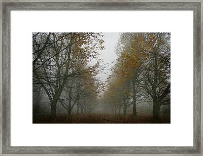 November Wanderings Framed Print by Georgia Fowler
