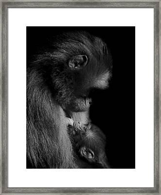 Nurture Framed Print by Paul Neville