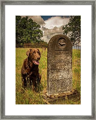 Nute In The Cemetery Framed Print by Jean Noren