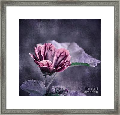 o Flora with texture o Framed Print by SK Pfphotography