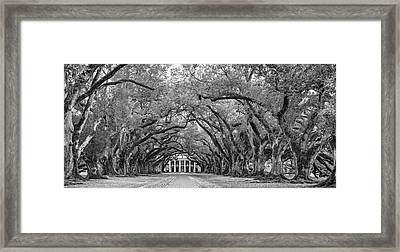 Oak Alley 4 Bw Framed Print by Steve Harrington