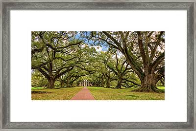 Oak Alley 5 Framed Print by Steve Harrington