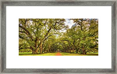 Oak Alley 6 - Paint Framed Print by Steve Harrington