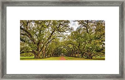 Oak Alley 6 Framed Print by Steve Harrington