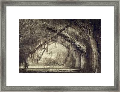Oak Avenue Framed Print by Magda Bognar