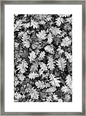 Oak Framed Print by Tim Gainey