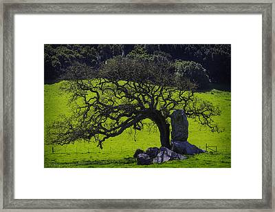 Oak Tree And Rock Framed Print by Garry Gay