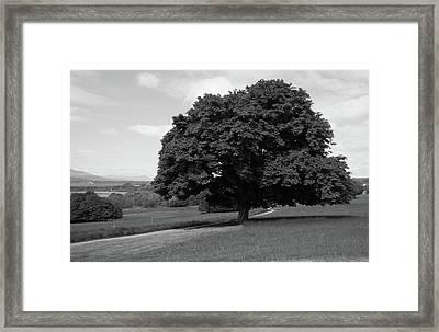 Oak Tree - Killarney National Park Framed Print by Aidan Moran