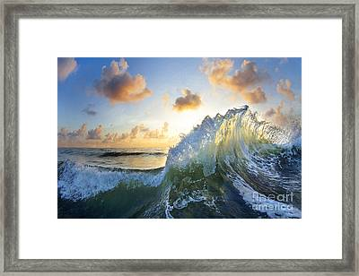 Ocean Bouquet  -  Part 2 Of 3 Framed Print by Sean Davey