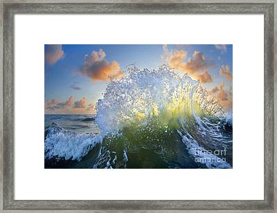 Ocean Bouquet  -  Part 3 Of 3 Framed Print by Sean Davey