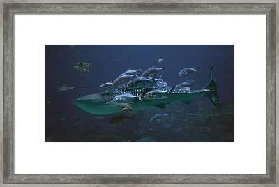 Ocean Treasures Framed Print by Betsy Knapp