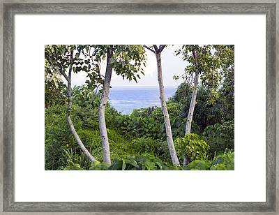 Ocean View Through Jungle Framed Print by Frank Wilson