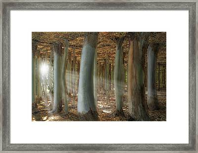 Odd Forest Framed Print by Melanie Viola