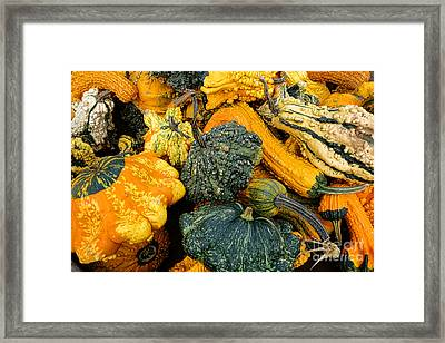 Odd Gourds One Framed Print by Olivier Le Queinec