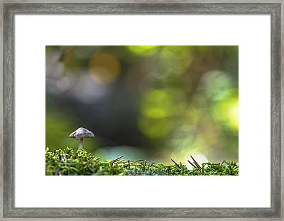 Ode To A Mushroom Framed Print by Mary Amerman