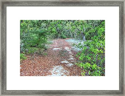 Off The Beaten Trail Framed Print by JC Findley
