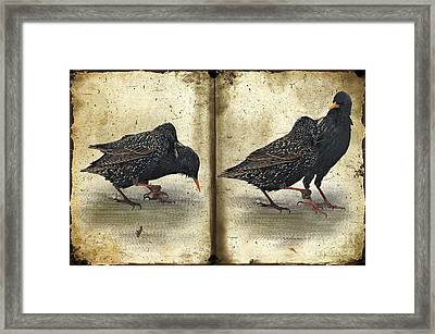 Oh No You Didn't Framed Print by Lois Bryan
