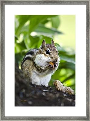 Oh Nuts Framed Print by Christina Rollo