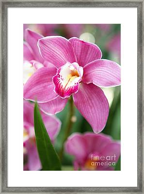 Oh So Orchid Framed Print by A New Focus Photography