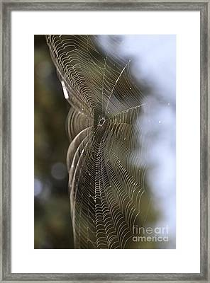 Oh What Webs We Weave Framed Print by Clayton Bruster