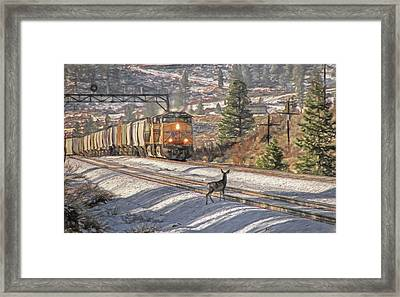 Ohhh Deer Framed Print by Donna Kennedy